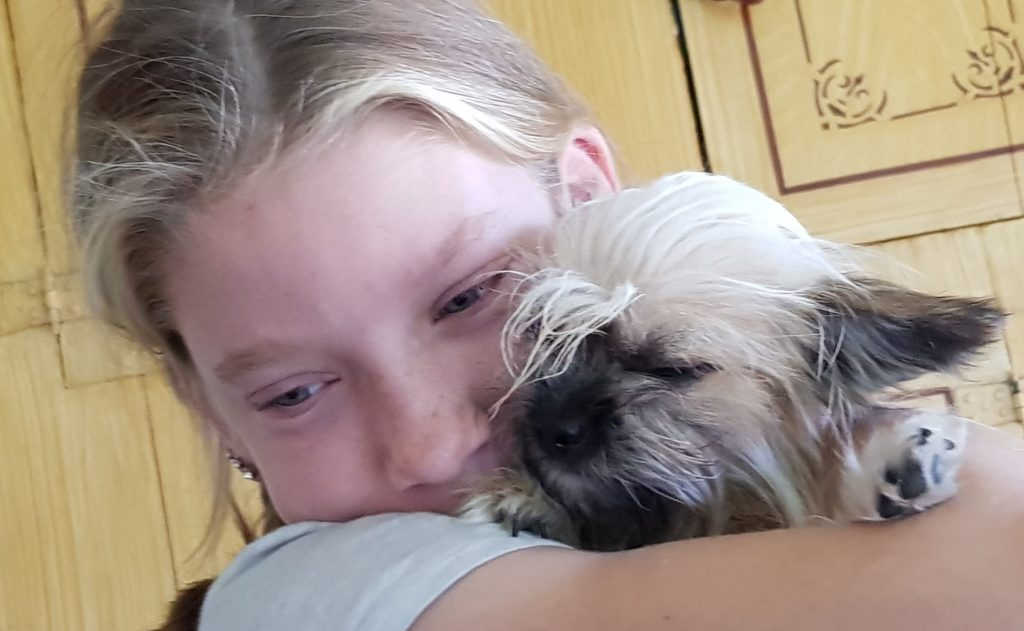 kind geen angst voor honden