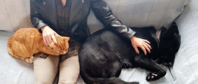EMDR Therapie met huisdieren/hondern/katten